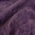 Vittorio violet